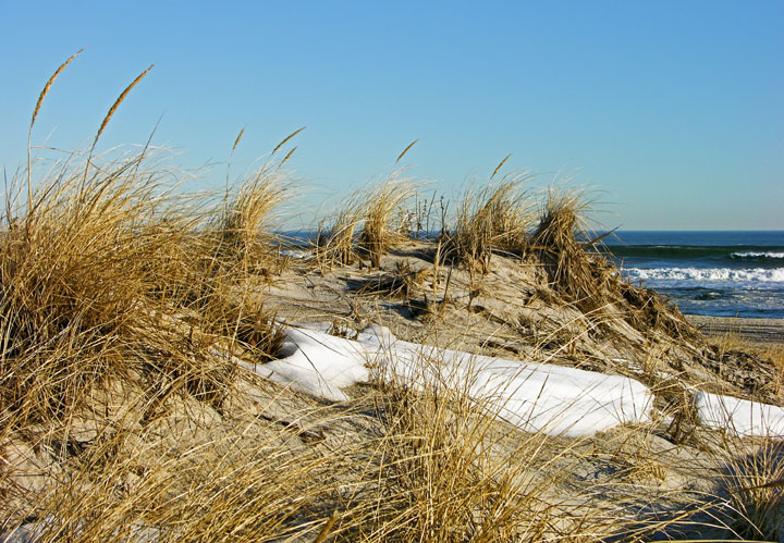 A sandy dune is crowned by scattered snow and long, golden grasses.  The ocean is seen in the distance.